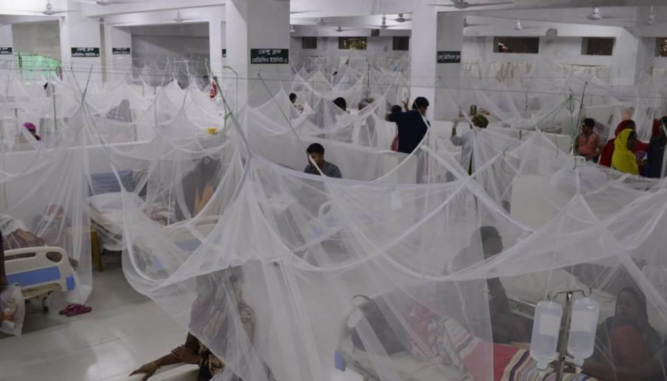 dengue ward
